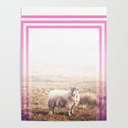 Sheep - pink graphic Poster