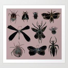 Entomology black and Antique Rose Art Print