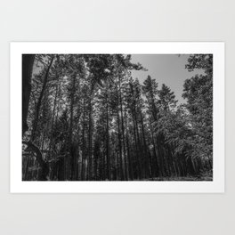 Black and white forest - Beautiful trees Art Print