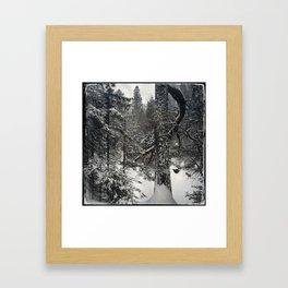 Winter white pine Framed Art Print