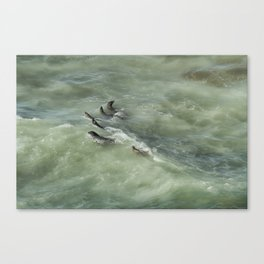 Sea Lions Cavorting in a Green Sea Canvas Print