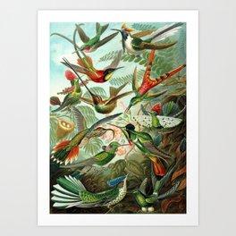 Ruby-throated Hummingbirds & Hummingbirds of the World Rainforest Garden Still Life painting Art Print