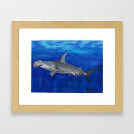 Hammerhead Sharks Framed Art Print