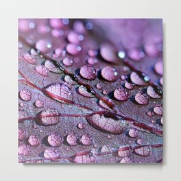 Water Drops On Leaf Metal Print