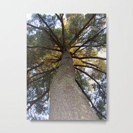 Rainbow Tree Canopy | Woods Metal Print