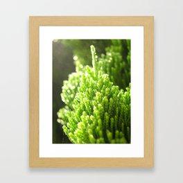 sunshine pond pine Framed Art Print