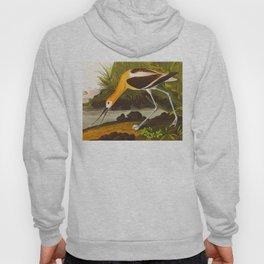 American Avocet John Audubon Vintage Scientific Bird Illustrations Hoody