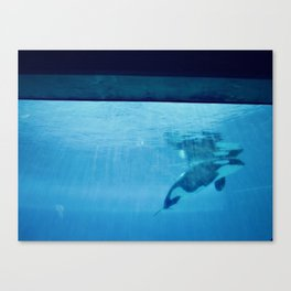 Orca Of The Ocean Canvas Print