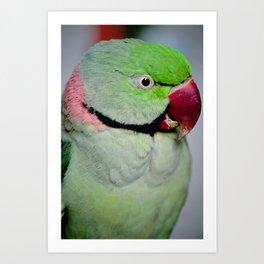 Green Indian Ring Neck Art Print