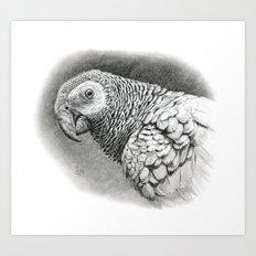 African Grey Parrot G01-2008 Art Print
