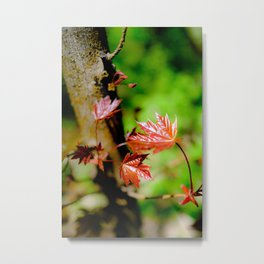"""""""Life in the details"""" / Nature / Plants Metal Print"""