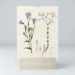 Flax (Linum) illustration from Medical Botany (1836) by John Stephenson and James Morss Churchill Mini Art Print