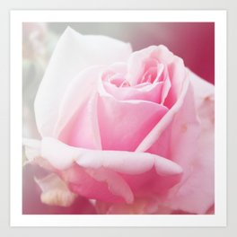 *Pinklight - Rose II Art Print