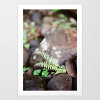 Ferns I Art Print