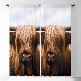 Scottish Highland Cattle in Scotland Portrait II Blackout Curtain