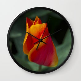 Red tulip  Wall Clock