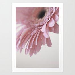 Gerbera Pink (2) Art Print