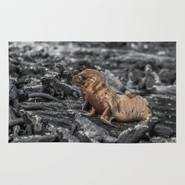 Baby sea lions surrounded by marine iguanas Galapagos Rug