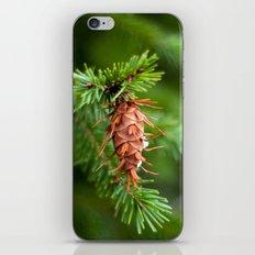 Spikey Pine Cone iPhone & iPod Skin