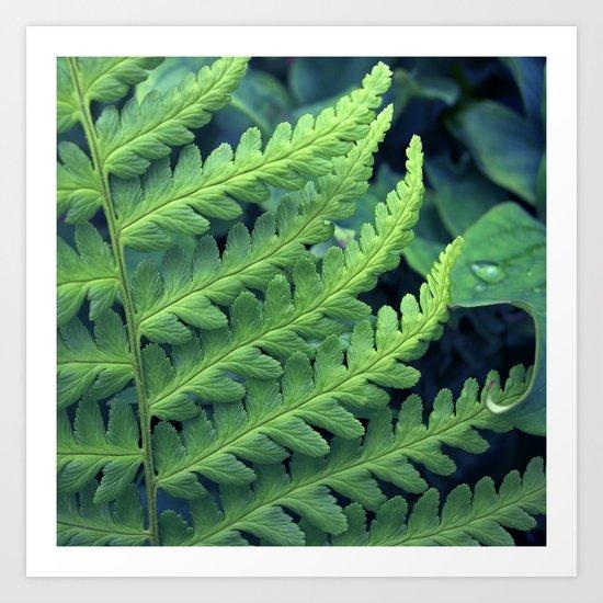 green fern abstract VII Art Print
