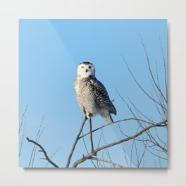 Winter Fashion Metal Print