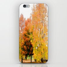 Autumn Trees iPhone & iPod Skin