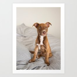 Fawn Colored Puppy on Bed Art Print