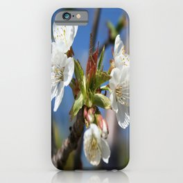 Cherry Blossom In Spring Sunlight iPhone Case