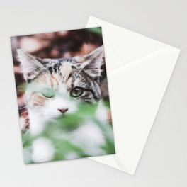Kitten Hiding in the Grass Stationery Cards