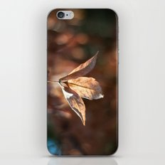 Late Autumn Light iPhone & iPod Skin