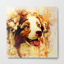 australian shepherd dog 2 wsstd Metal Print