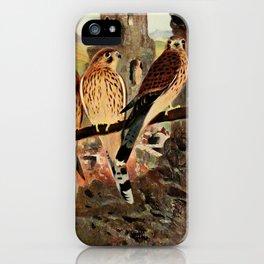 Kuhnert, Friedrich Wilhelm (1865-1926) - Wild Life of the World 1916 v.1 (Kestrel) iPhone Case
