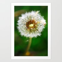 dandelion Art Prints featuring Dandelion by Falko Follert Art-FF77