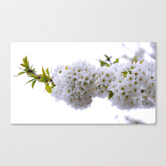 spring mode on Canvas Print