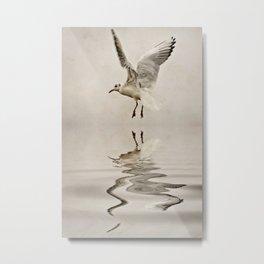 Black-headed gull Metal Print