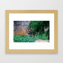 Siberian Tiger Framed Art Print