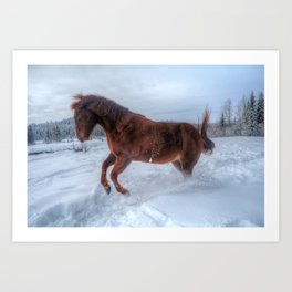 Fire and Ice - Equine Photography Art Print