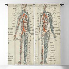 Anatomy Vintage Scientific Illustration French Language Encyclopedia Lithographs Educational Blackout Curtain
