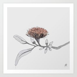 eucalyptus tereticornis Art Print