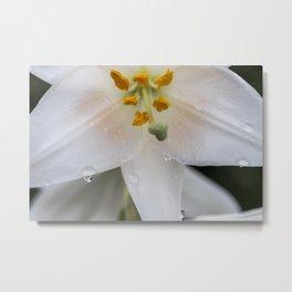 Raindrops on lily Metal Print