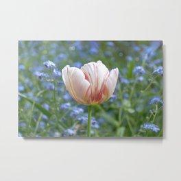 Tulip Pink Parfait  Metal Print