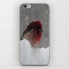 Purple GrosBeak Bird iPhone & iPod Skin
