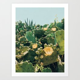 A Field of Prickly Pear Cactus Art Print