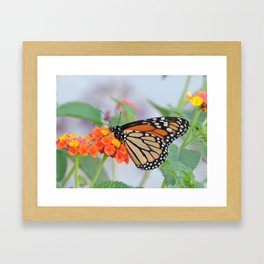 The Monarch Has An Angle Framed Art Print