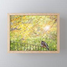 Bird, Central Park, New York City Framed Mini Art Print
