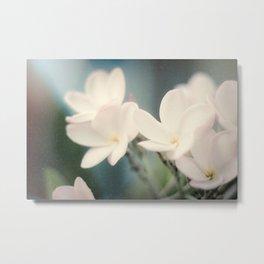 White Plumeria Flower Metal Print