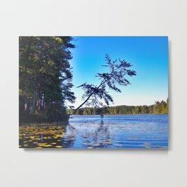 Crooked Tree on Moose Pond in Maine Metal Print