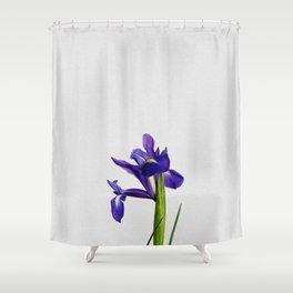 Iris Still Life, Flower Photography Shower Curtain
