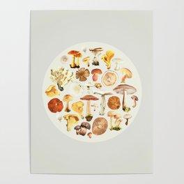 Mushroom Medley ll Poster