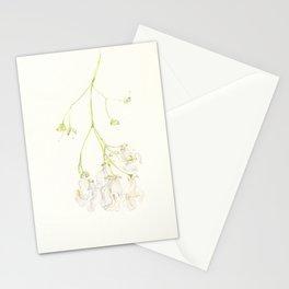 Catalpa Blossom 1 Stationery Cards